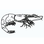 Illustration du profil de À la criée